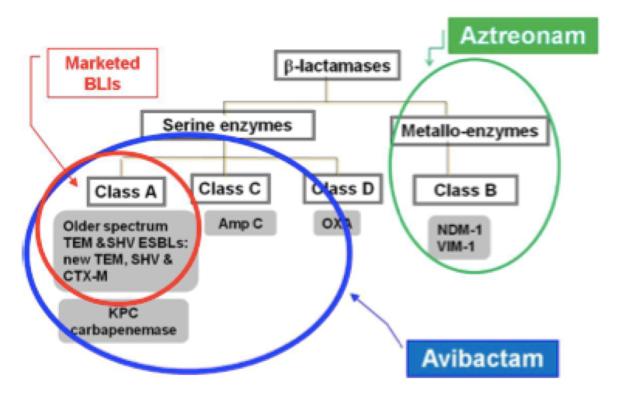 Efecto de la combinación de aztreonam y avibactam en lsu actividad frente a Enterobacterias portadoras de b-lactamasas