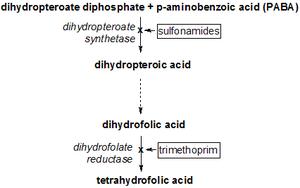 Vía metabólica del THF